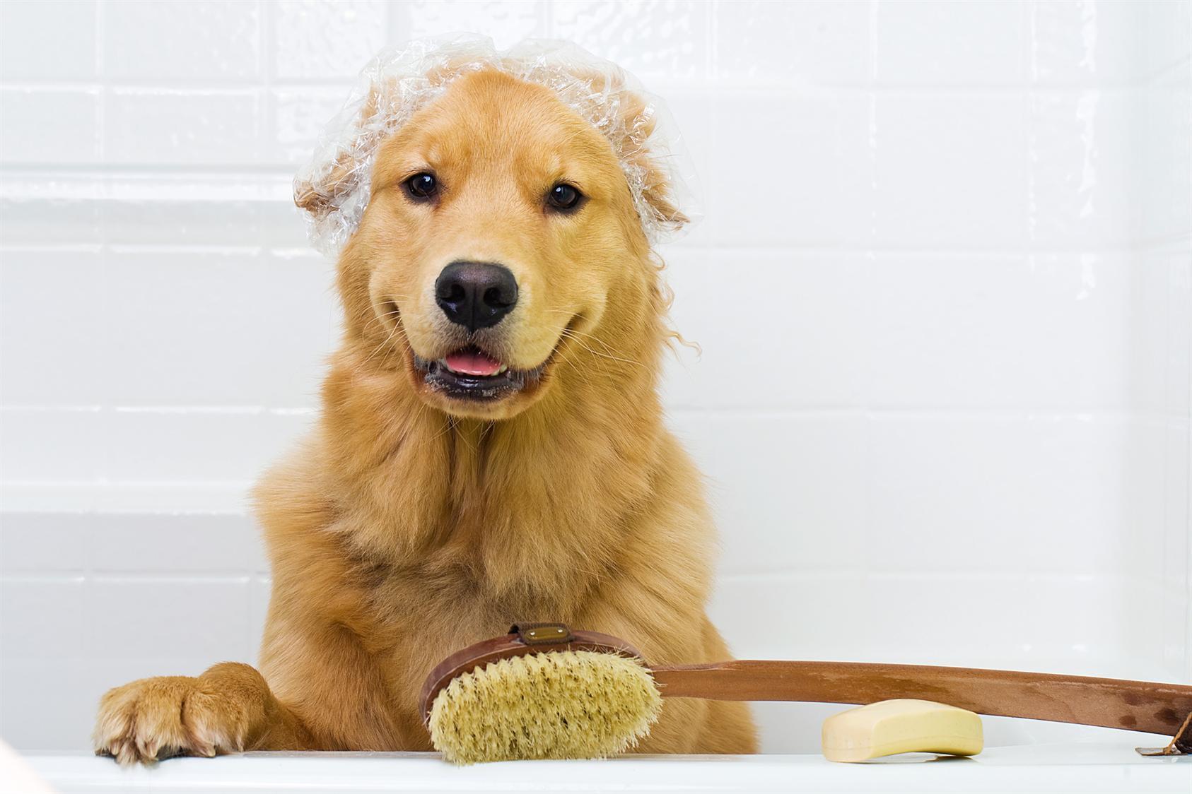 Nossos pets precisam de banho.